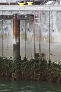 seaport ladder