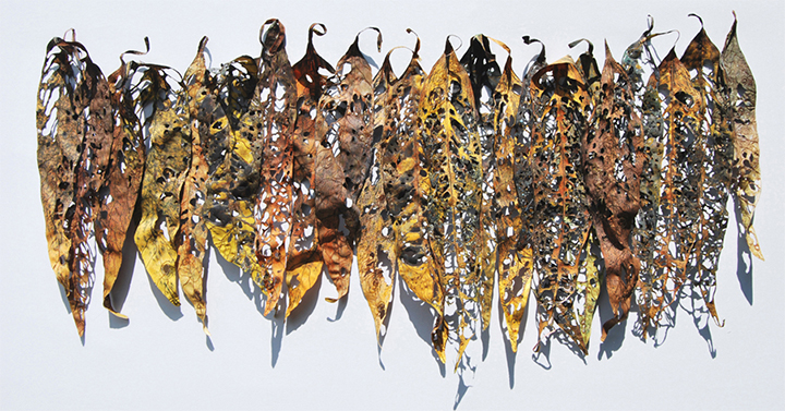 Leaf Fragments, var 1 by Barbara Schneider