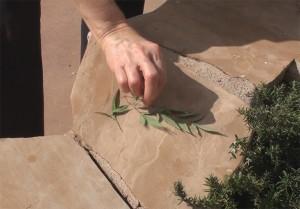 leaves on flagstone