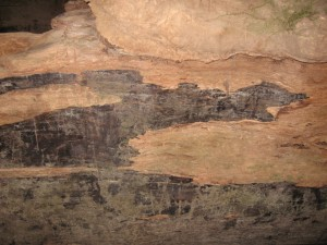 redwood bark2