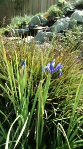 first iris 2016