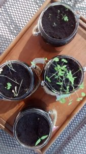 herbs july