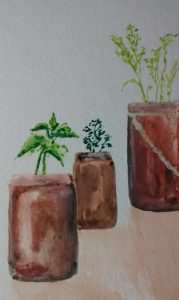 herbs watercolor